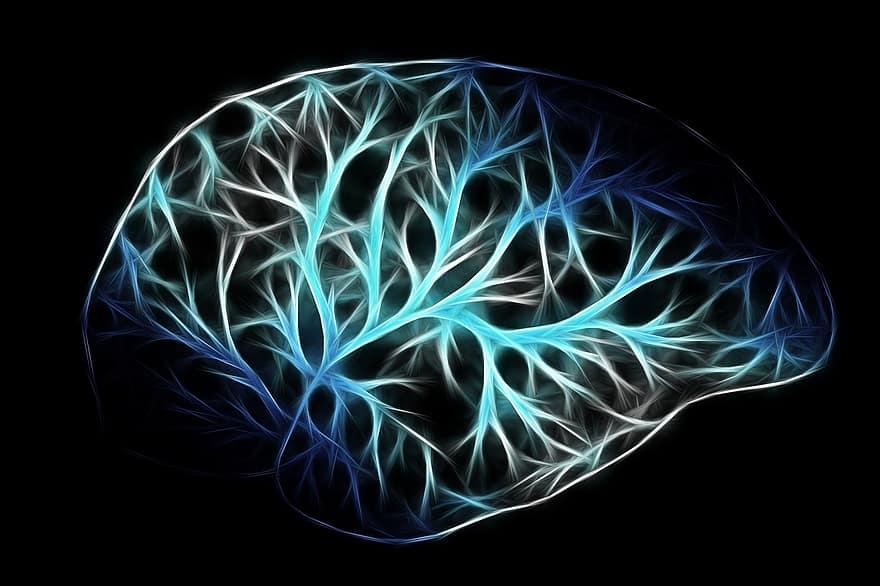 Usamos más del 10% de nuestro cerebro