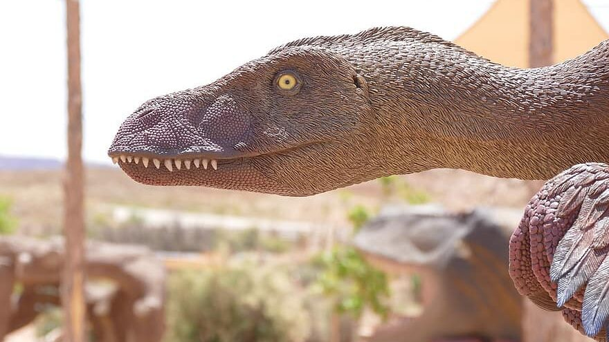 dinosaurio con plumas evolucionaron