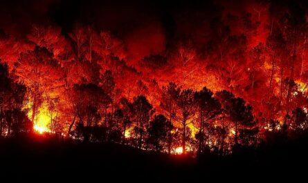 quemar selva amazónica