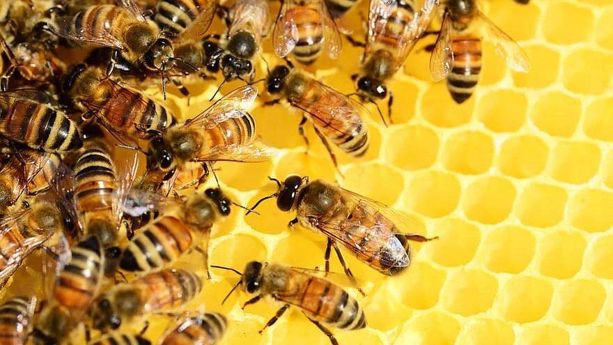 colonias de abejas