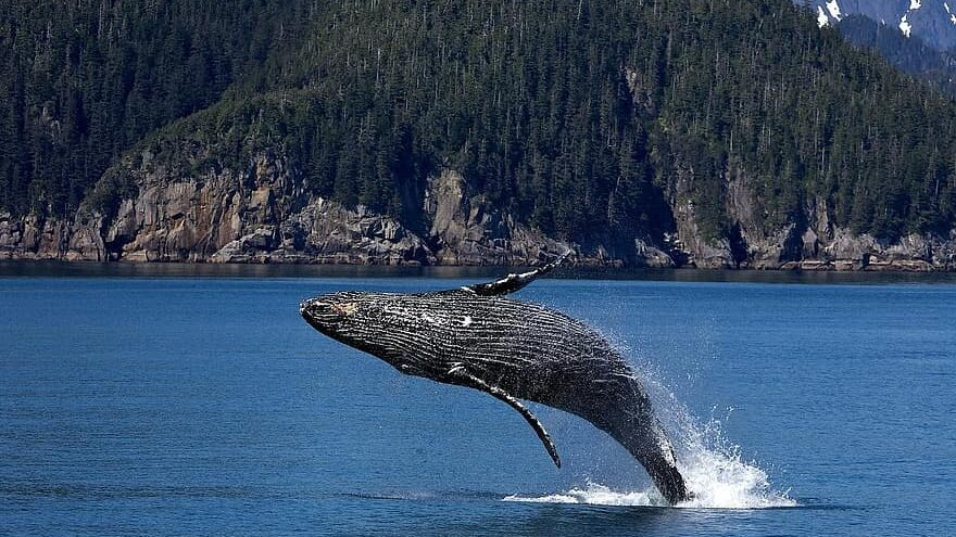 extracción de petrolero en el mar de Alaska