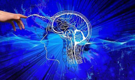 nuestro cerebro necesita lípidos
