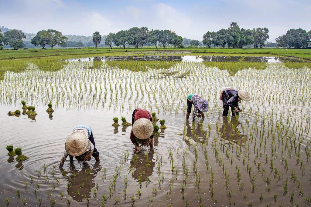 la seguridad alimentaria puede encontrarse en la producción de alimentos y los sistemas alimentarios entre otros