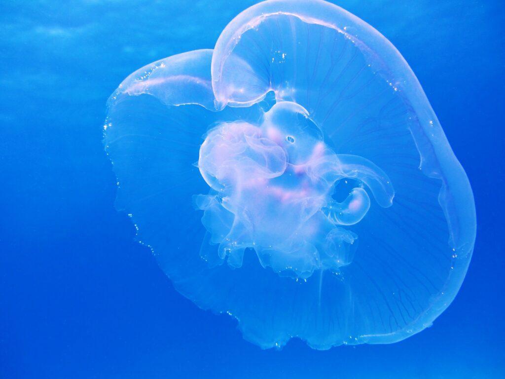 Las razones son simples: una bolsa de plástico flotante puede parecerse a una gran cantidad de medusas