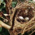 Las noches más cálidas llevan a las aves a poner huevos antes