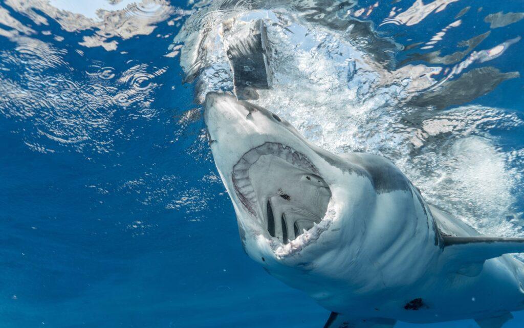 """Una mujer necesitó cientos de puntos de sutura para """"reconstruir"""" su mano por mordida de tiburón en la costa de las Islas Vírgenes de Estados Unidos"""