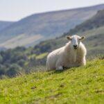 Estudio revela cómo los animales se adaptan a las estaciones
